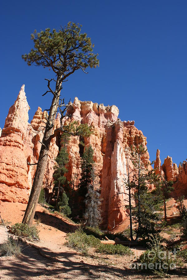 Canyon Photograph - At The Bottom Of The Bryce Np by Christiane Schulze Art And Photography