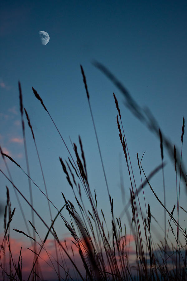 Grass Photograph - At The Fall Of Night by K Hines