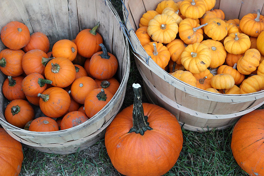 Pumpkin Photograph - At The Farmers Market 4 by Mary Bedy