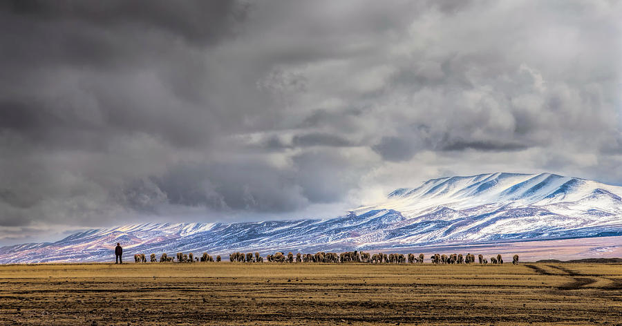 Grazing Photograph - At The Foot Of The Tianshan Mountains by Jun Zuo