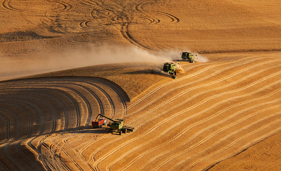 Harvest Photograph - At The Point 2 by Mary Jo Allen