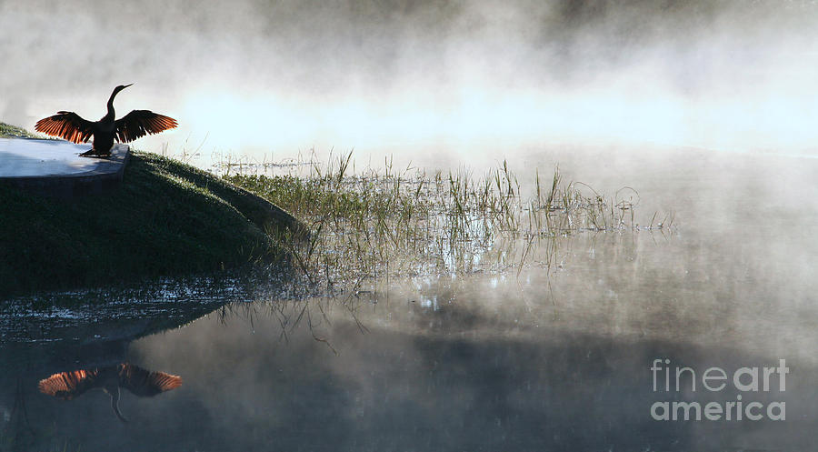 Mist Photograph - At The Pond by Monika A Leon