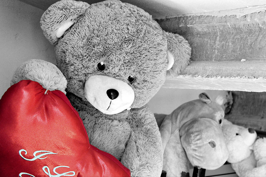 Teddy Photograph - At The Storeroom by Pedro Fernandez