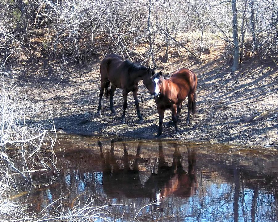 Horses Photograph - At The Water Hole by Rosalie Klidies