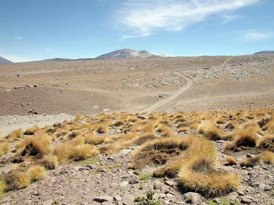 Nobody Photograph - Atacama Desert Vegetation by European Southern Observatory
