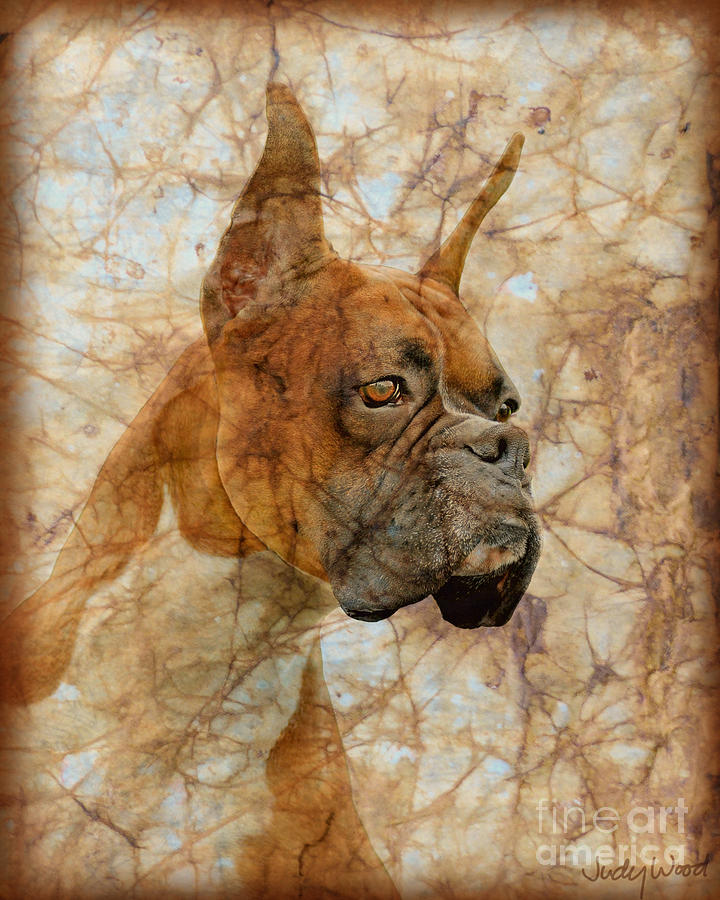 Dog Digital Art - Attention by Judy Wood
