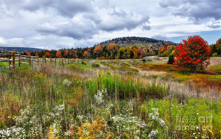 Fall Colors Photograph - August Fall Colors Flowers And Trees I - West Virginia by Dan Carmichael