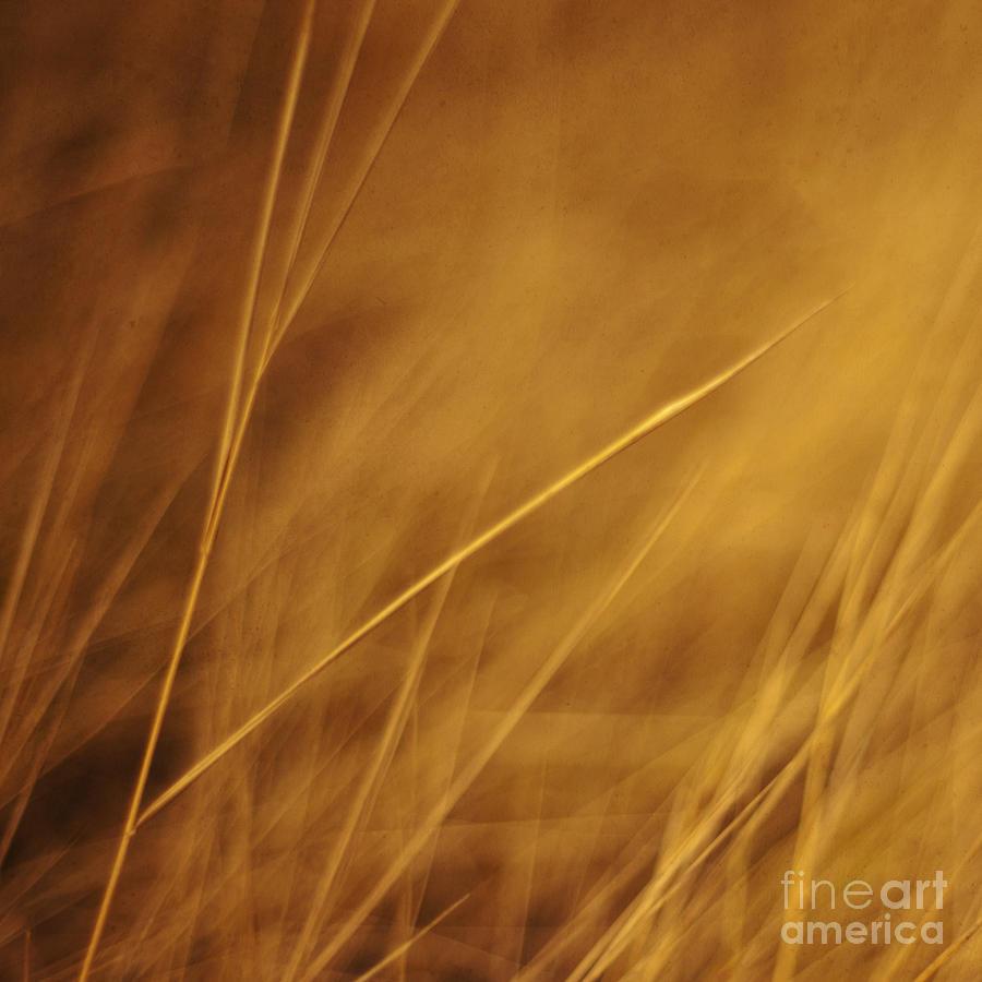 Grass Photograph - Aurum by Priska Wettstein