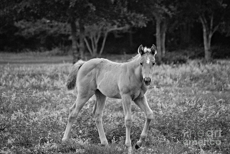 Filly Photograph - Aust N Flowers by Melissa Ahlers