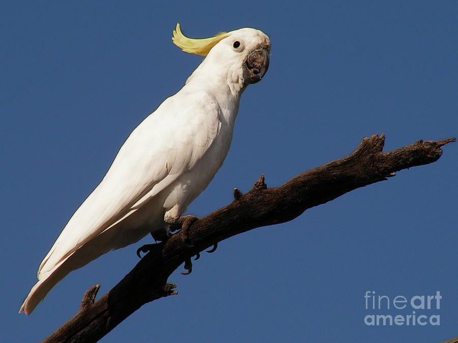 Bird Photograph - Australian Bird by Ben Yassa