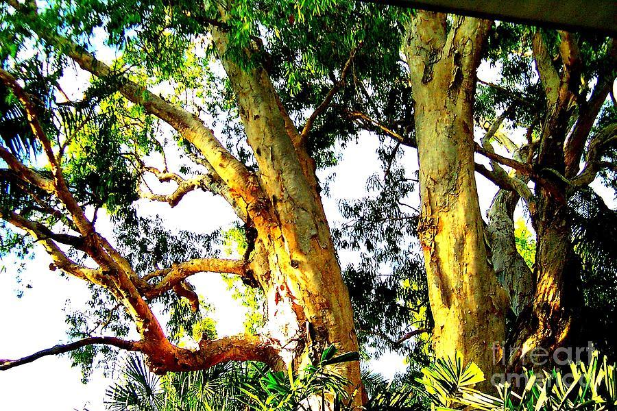 Australian Photograph - Australian Trees by John Potts