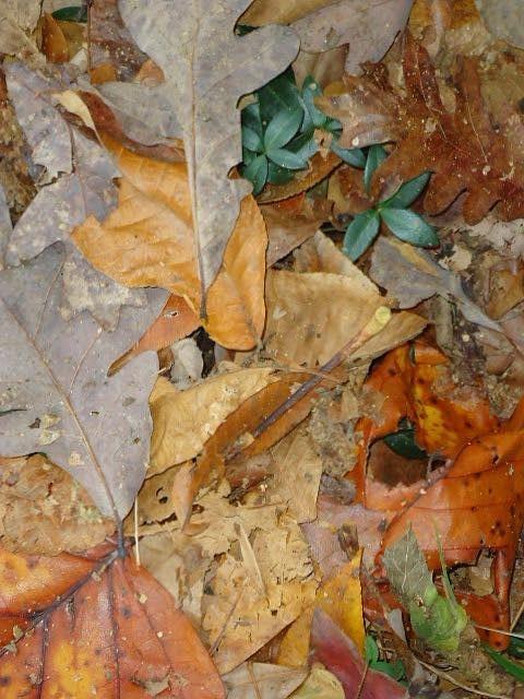 Photo Photograph - Autum Leaves by Glenn Calloway