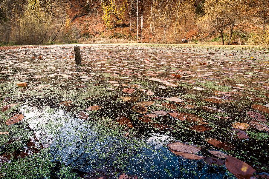Autumn Photograph - Autumn - 10 by Okan YILMAZ