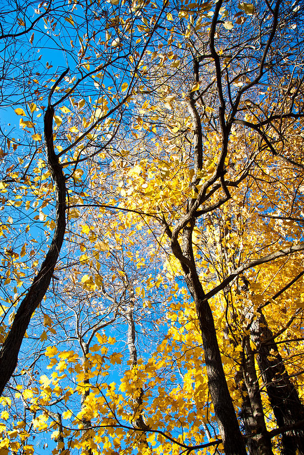 Trees Photograph - Autumn Abstract by Jeanne Sheridan