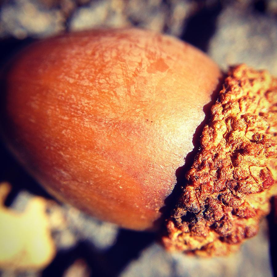 Autumn Photograph - Autumn Acorn by Candice Trimble