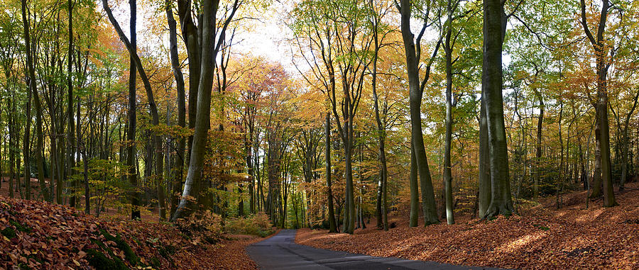 Autumn by Adrian Brockwell