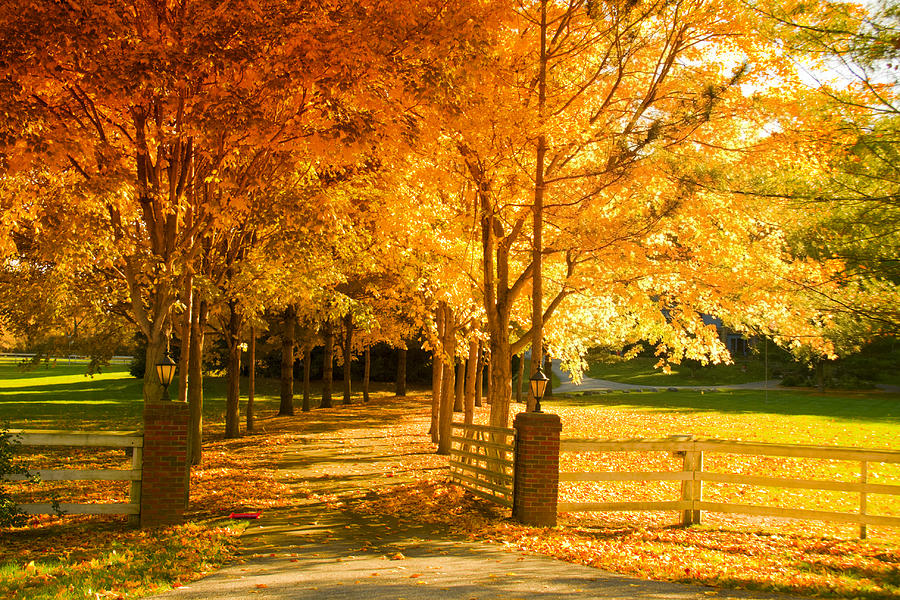 Fall Photograph - Autumn Alley by Alexey Stiop