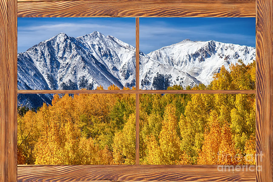 Autumn aspen tree forest barn wood picture window frame for Wood windows colorado