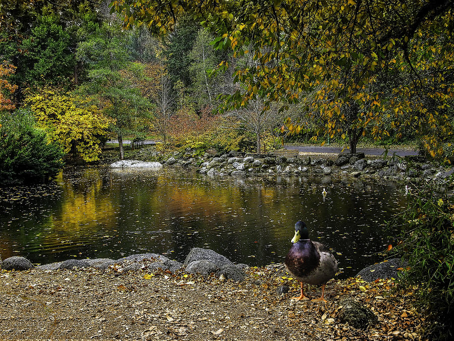 Autumn Photograph - Autumn At Lithia Park Pond by Diane Schuster