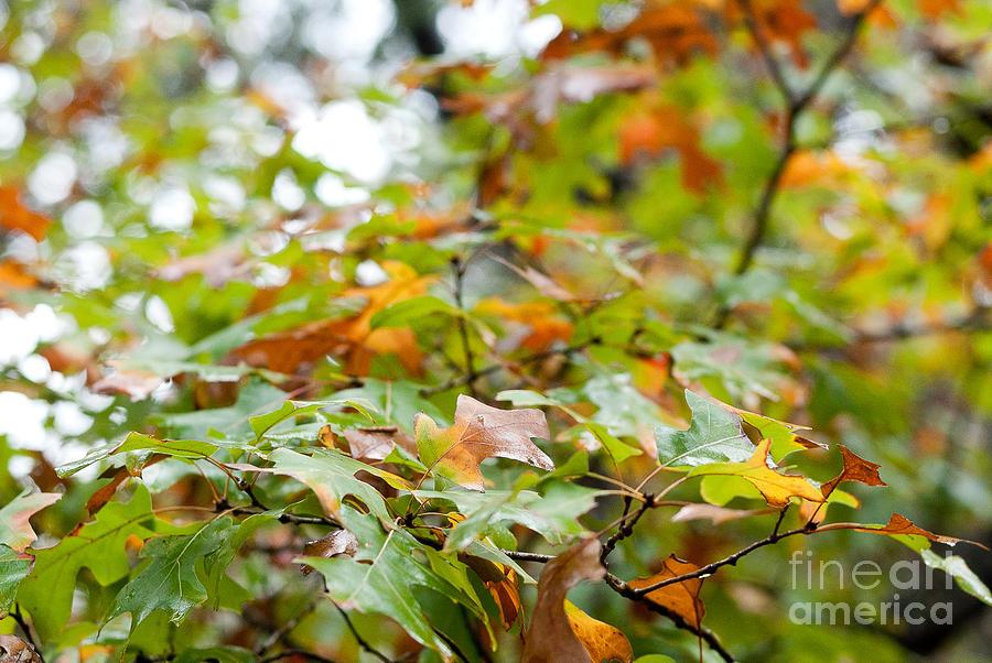 Autumn Photograph - Autumn by Barbara Shallue