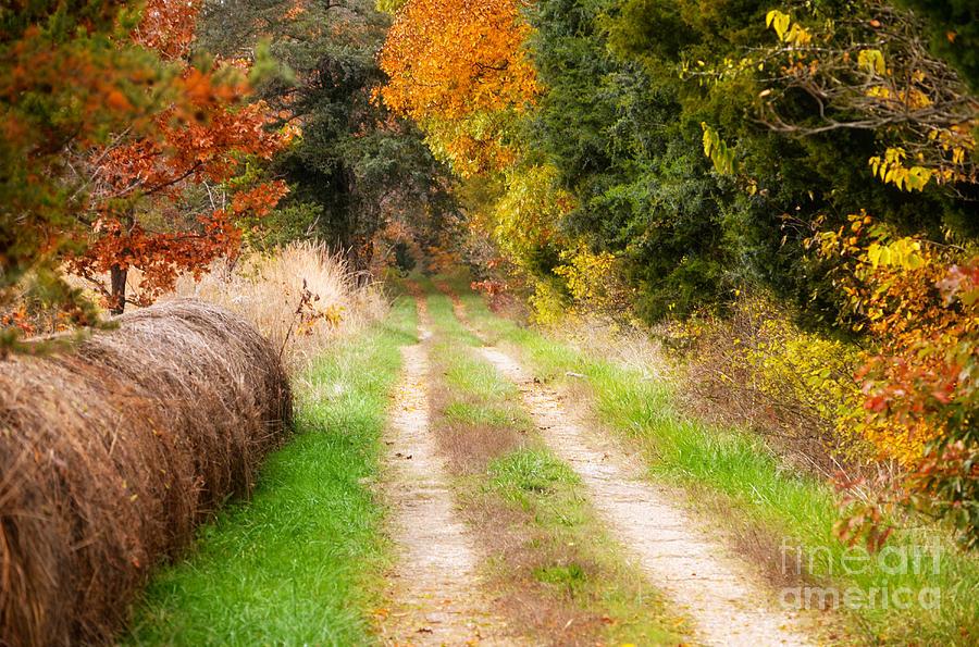 ⭐️ Cảnh Đẹp Mùa Xuân Trên Thế Giới ⭐️ Autumn-beauty-on-rural-dirt-road-peggy-franz