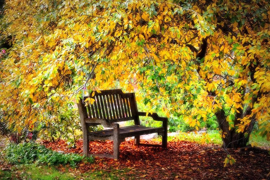 Rest Photograph - Autumn Bench In The Garden  by Lynn Bauer