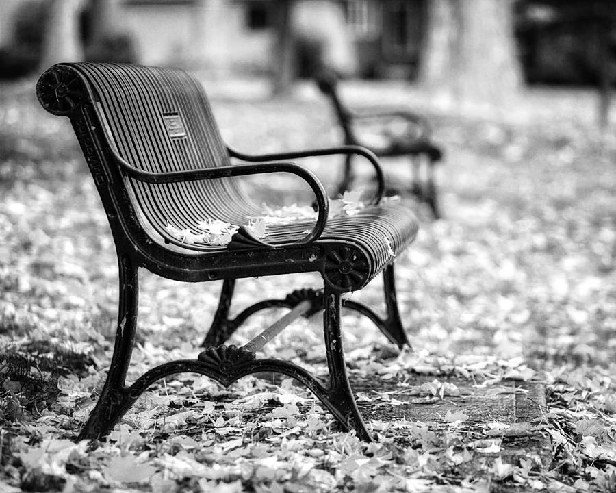 Autumn Bench Landscape In Black And White Photograph By