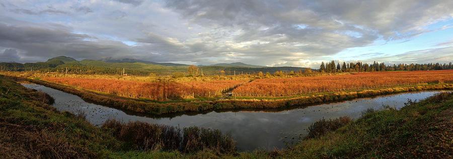 Autumn Cranberry Farming - Maple Ridge, British Columbia Photograph