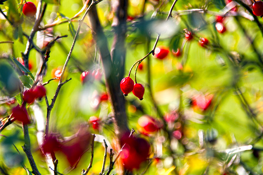 Berries Photograph - Autumn Berries  by Stelios Kleanthous