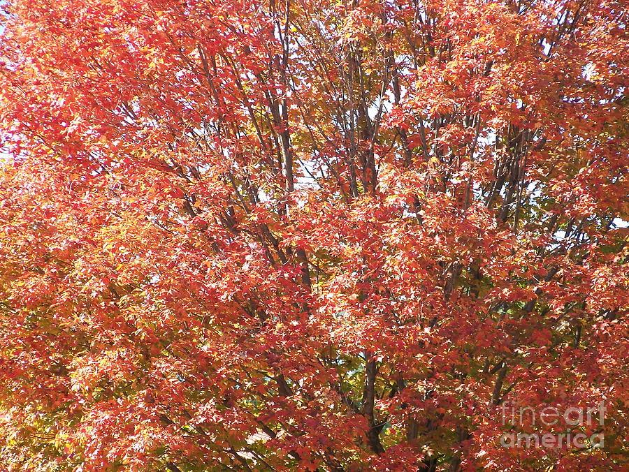 Autumn Blaze Photograph - Autumn Blaze by Kevin Croitz