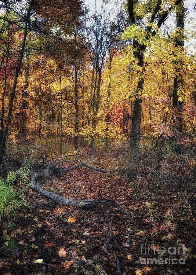 Autumn Blaze by Pamela Baker