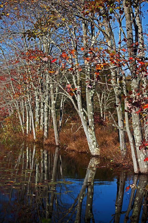 Autumn Photograph - Autumn Blue by Karol Livote