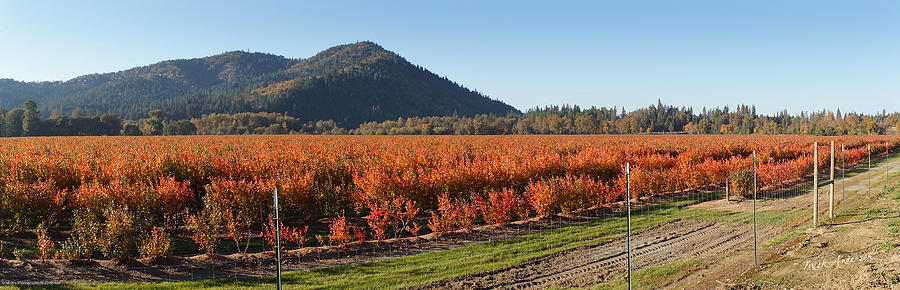 Panorama Photograph - Autumn Blueberry Panorama by Mick Anderson