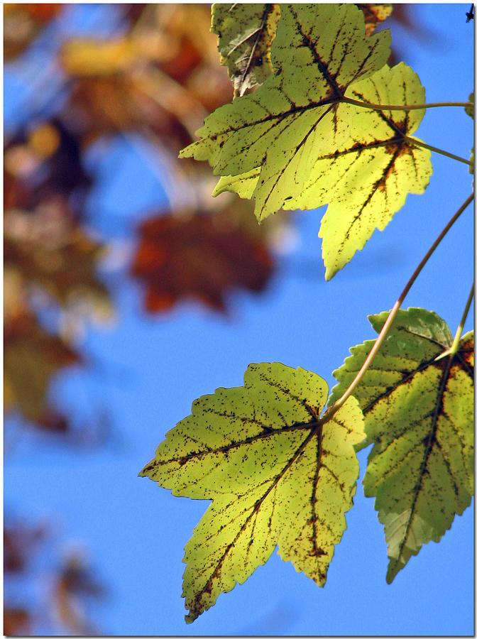 Autumn Photograph - Autumn Bokeh  by Chris Anderson