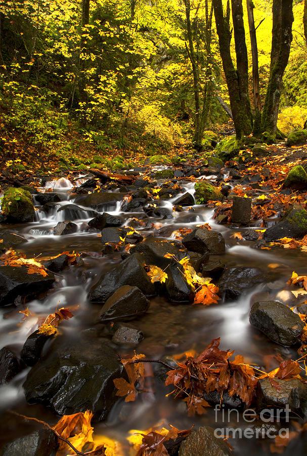 Starvation Creek Photograph - Autumn Breeze by Mike  Dawson