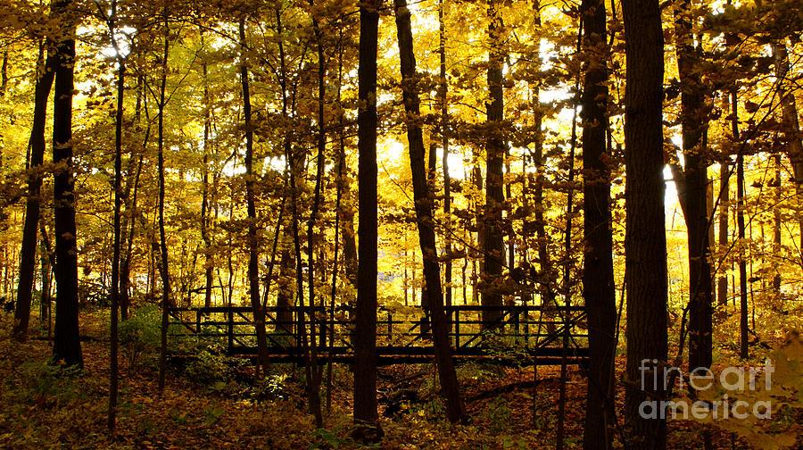 Autumnal Photograph - Autumn Bridge I by Valerie Fuqua