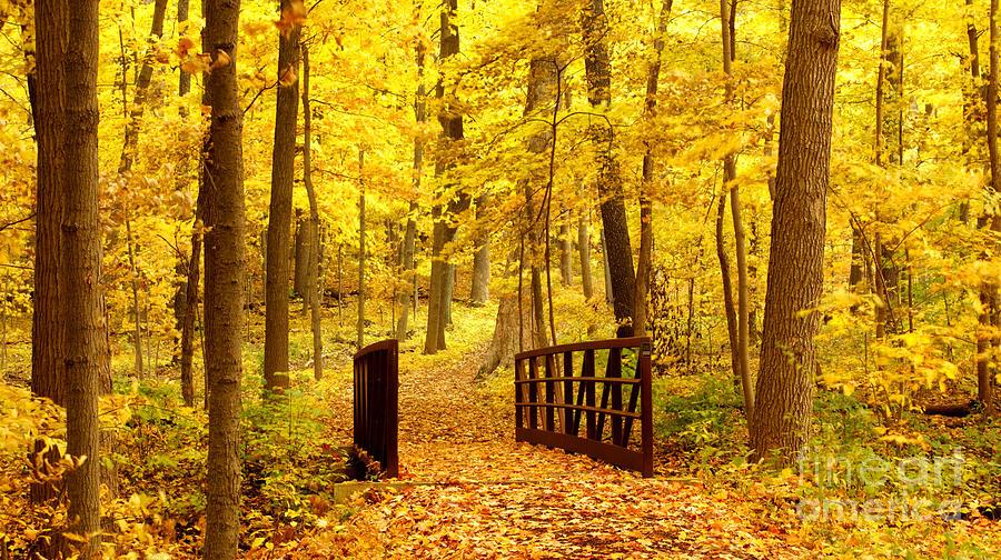 Autumnal Photograph - Autumn Bridge II by Valerie Fuqua