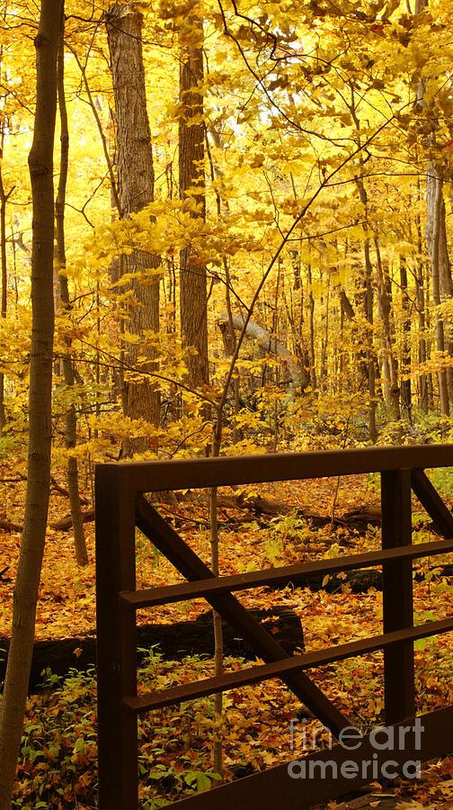 Autumn Photograph - Autumn Bridge Iv by Valerie Fuqua