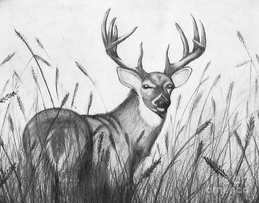 autumn buck drawing by jimmy wood