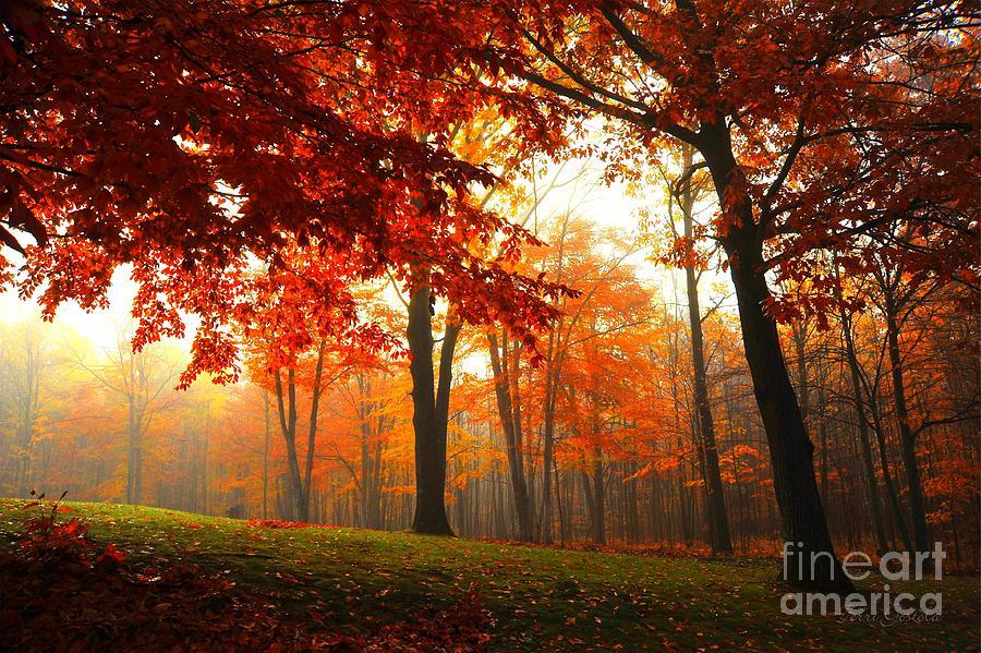 Autumn Photograph - Autumn Canopy by Terri Gostola