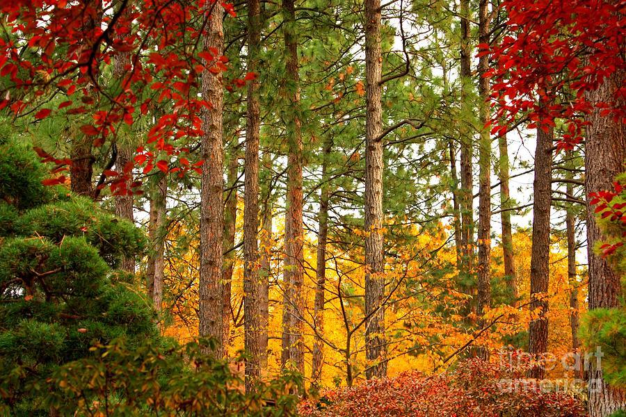 Autumn Photograph - Autumn Canvas by Carol Groenen