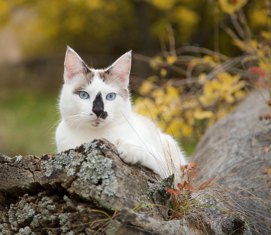 Autumn Photograph - Autumn Cat by Theresa Tahara