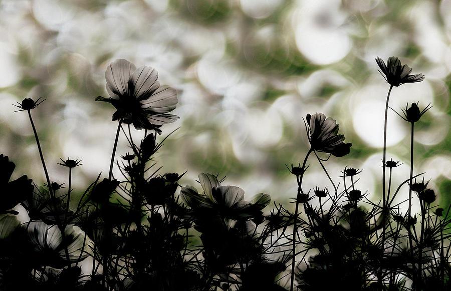 Toned Photograph - Autumn Chorus by Keisuke Ikeda @