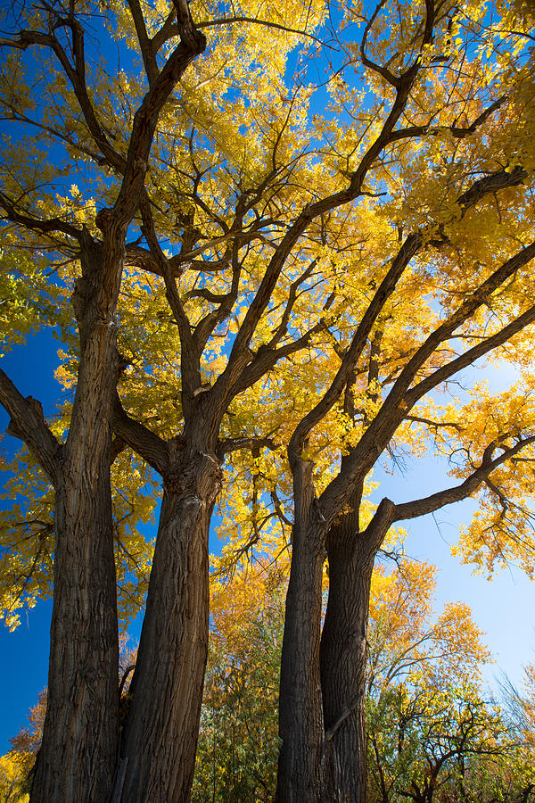 Fall Photograph - Autumn Color by Allen Lefever