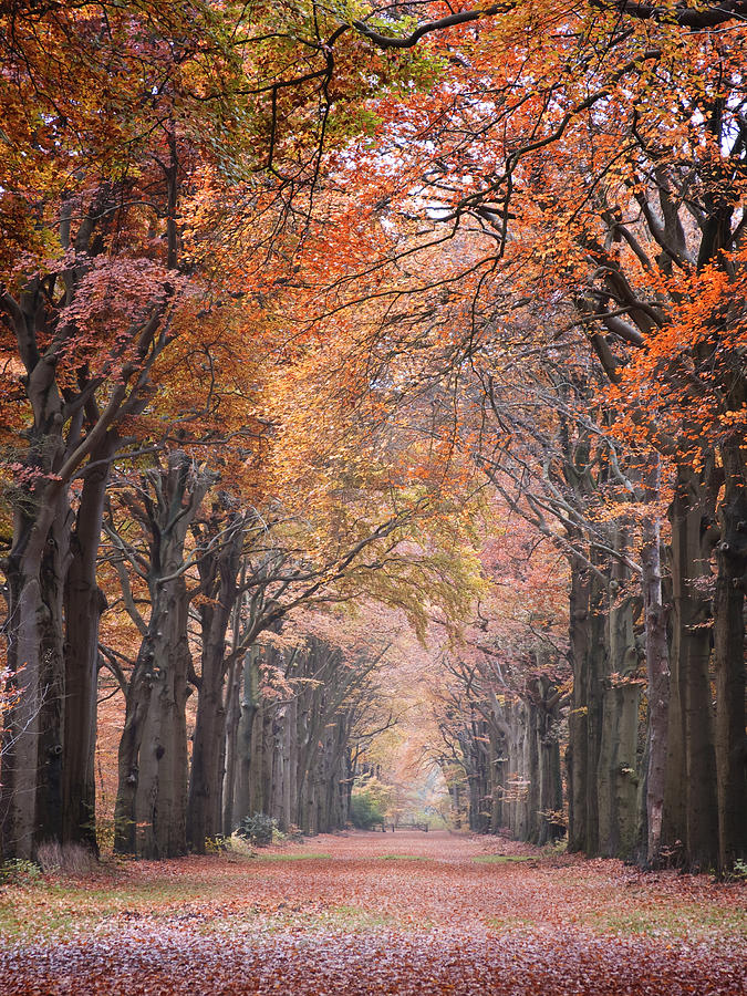 Autumn Photograph - Autumn - Colorful Red Green Orange Nature Landscape Fine Art Photography by Artecco Fine Art Photography