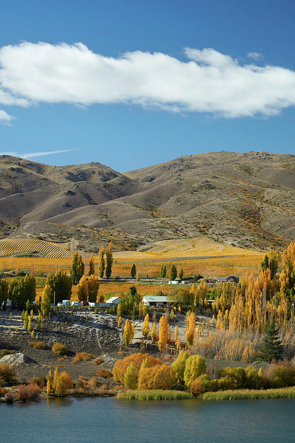 Agriculture Photograph - Autumn Colors, Bannockburn Inlet, Lake by David Wall