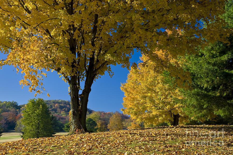 Autumn Photograph - Autumn Colors by Brian Jannsen