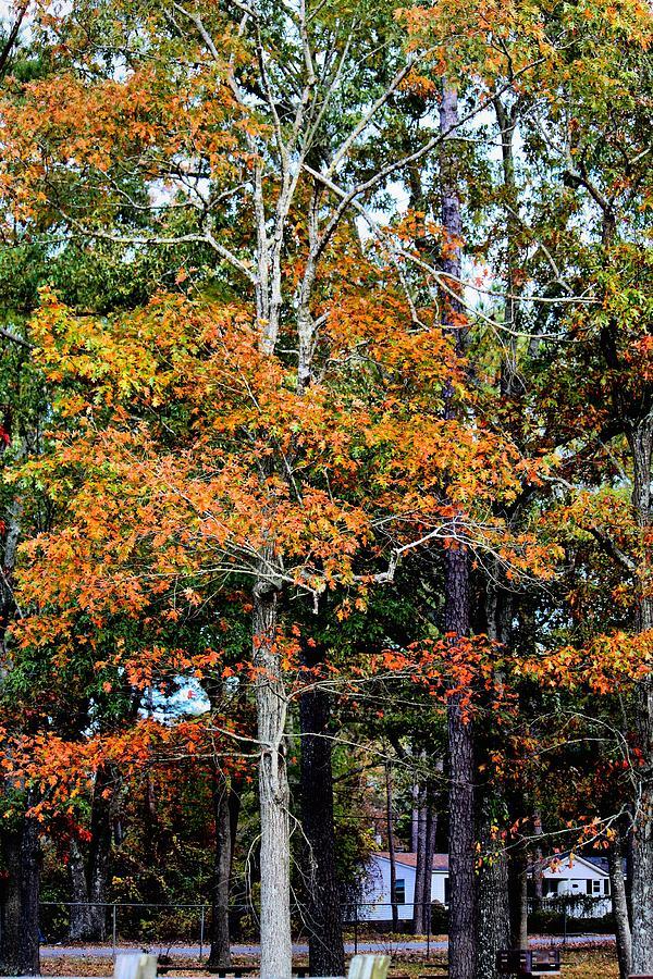 Tree Photograph - Autumn Colors by Carolyn Ricks