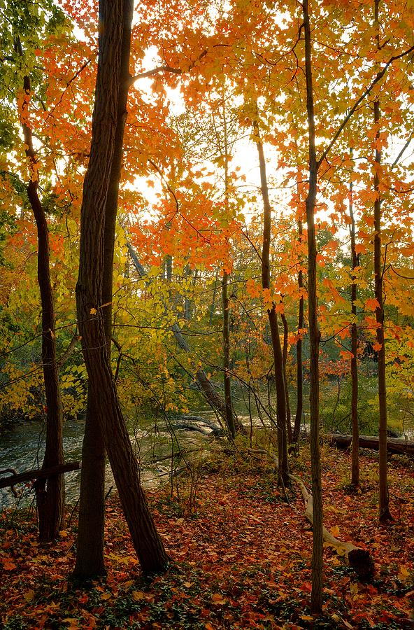 Forest Photograph - Autumn Colors by Charles Owens