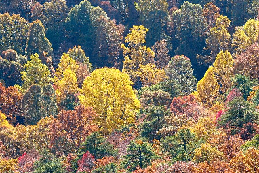 Aerial Autumn Forest Colors Photograph